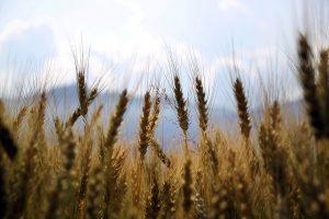 About Saskatchewan farming